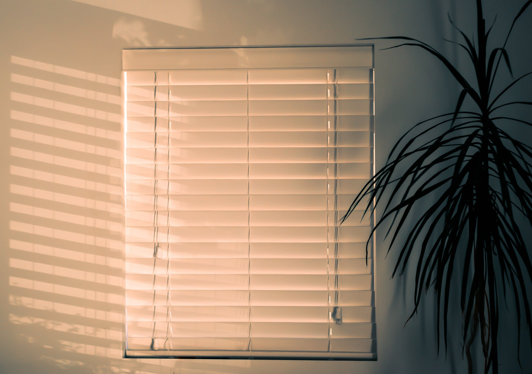 Bamboo Blinds Curtains